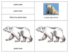 Parts of the Polar bear: Three Part Card Set