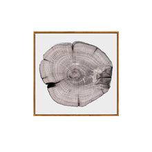 Growth Rings Framed Canvas Art
