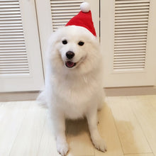 Santa Pet Christmas Apparels