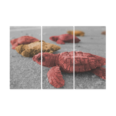 Turtles On The Beach - Canvas Wall Art - Red Orange Turles - Wall Art canvas prints turtles