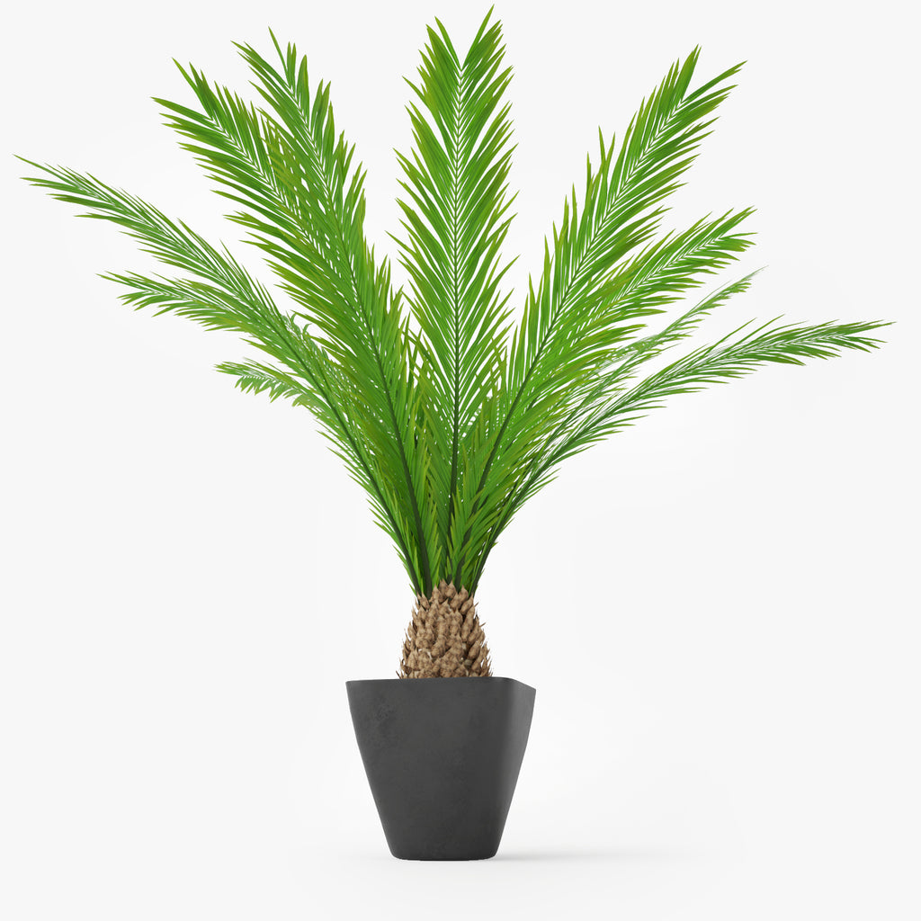 Palm Tree in Pot 3D Model | FaceQuad