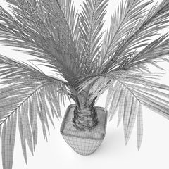 Palm Tree in Pot 3D Model