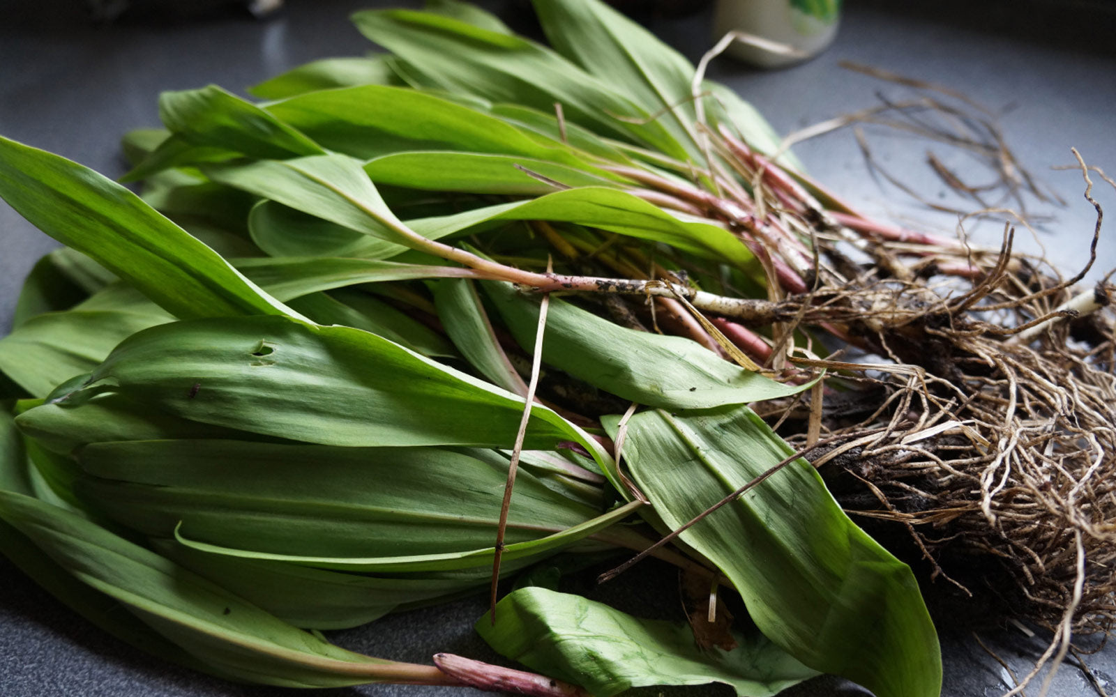 Eat May: Ramps