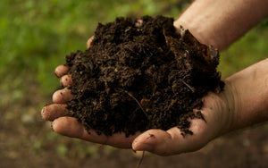 Summer School: Composting 101