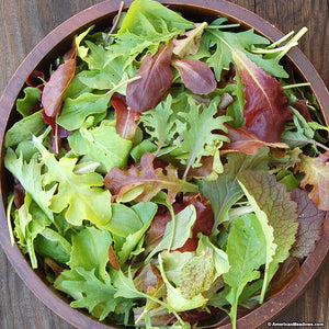 Salad Mix: Tuscan Kale, Red & Green Lettuce, Corn Salad, Mizuna