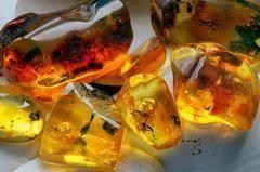 What is Amber & How Is It Made? The Golden-Brown Time Capsule