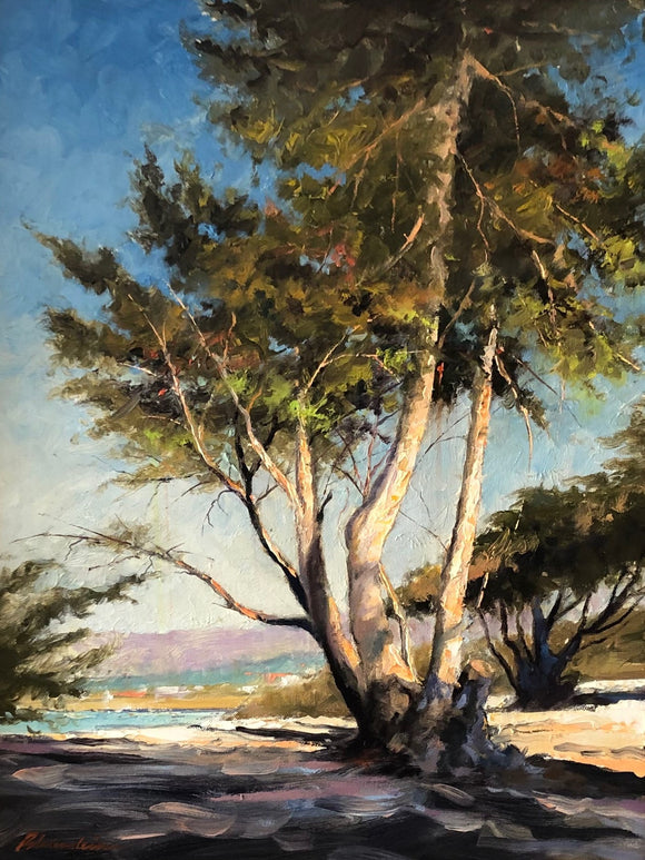 Cypress Tree in Carmel by Tom Bluemlien