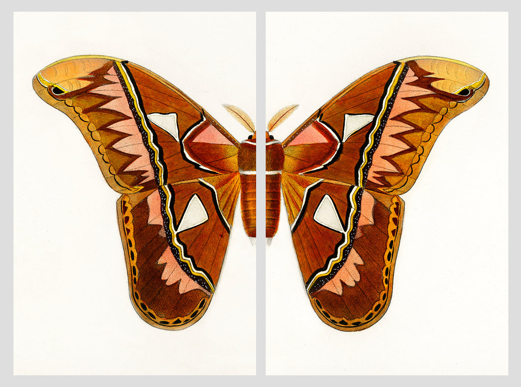 Aztec Butterfly Split