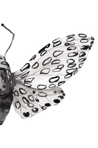 B&W Butterfly Split