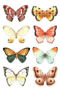 Copy of Butterfly Family on White