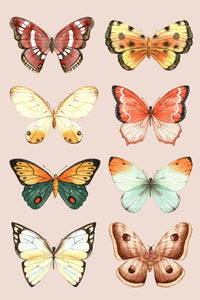 Butterfly Family on Blush