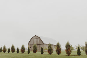 Foggy Barn Side