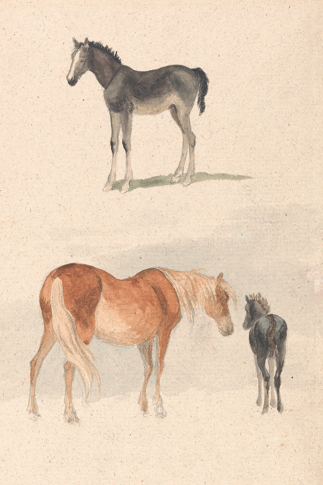 Mare and Foal Study