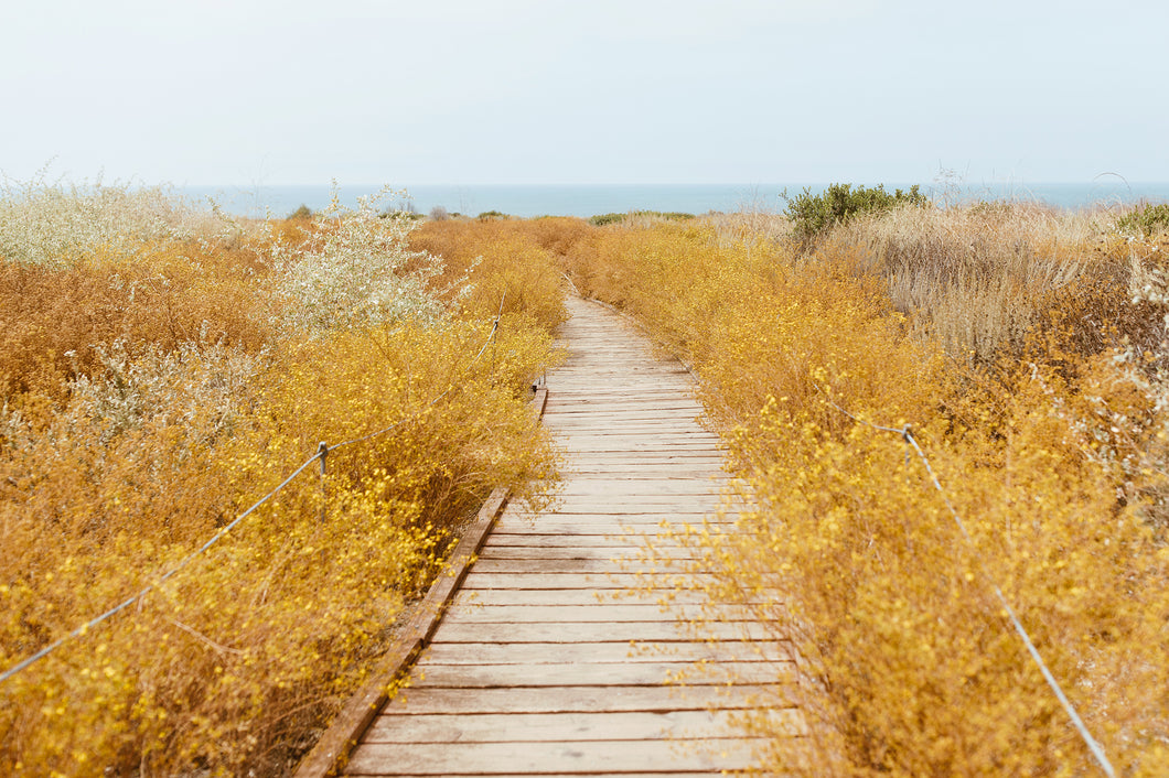 Yellow Path