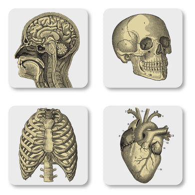 Curios Biology Coasters and Gift Box