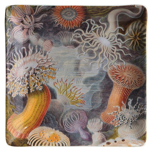 Ernst Haeckel Art Forms of Nature Trinket Dish and Gift Box