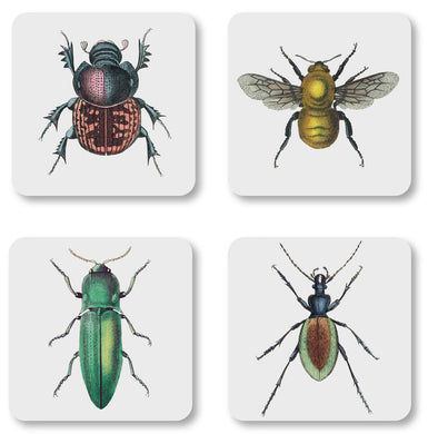 Natural History Insect Coasters and Gift Box