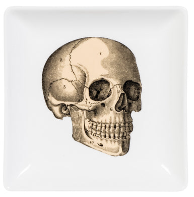 Anatomical Skull Trinket Dish and Gift Box