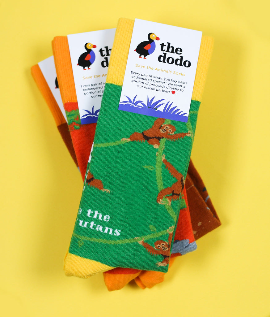 The Orangutan - The Dodo - Sock Club Store
