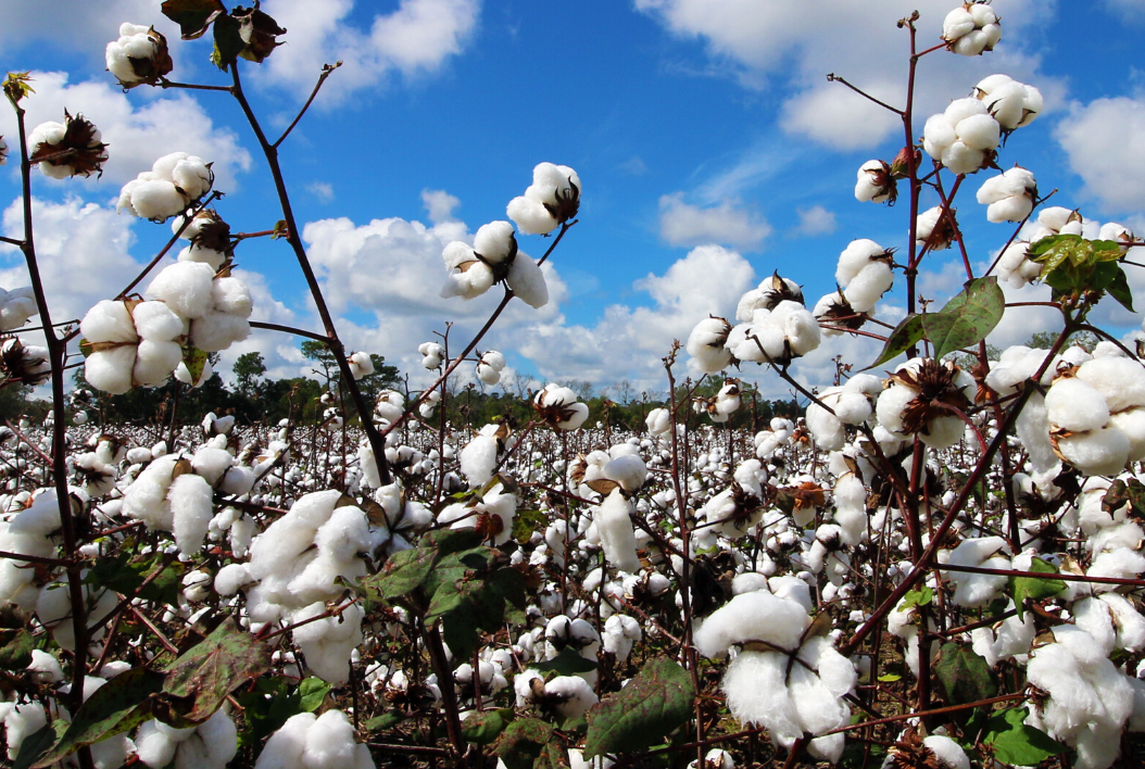 Top Ten Reasons to Love Organic Cotton
