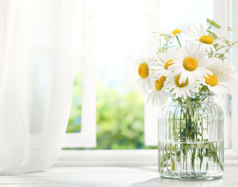 daisies in spring, Spring cleaning, spring, organic bedding