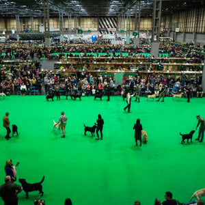 Crufts - Top Tips for visiting crufts, NEC Birmingham