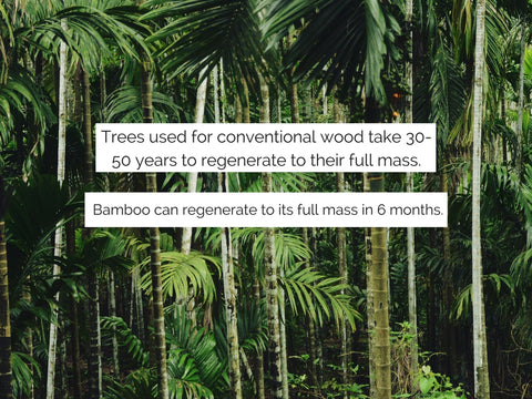 Bamboo can regenerate quickly
