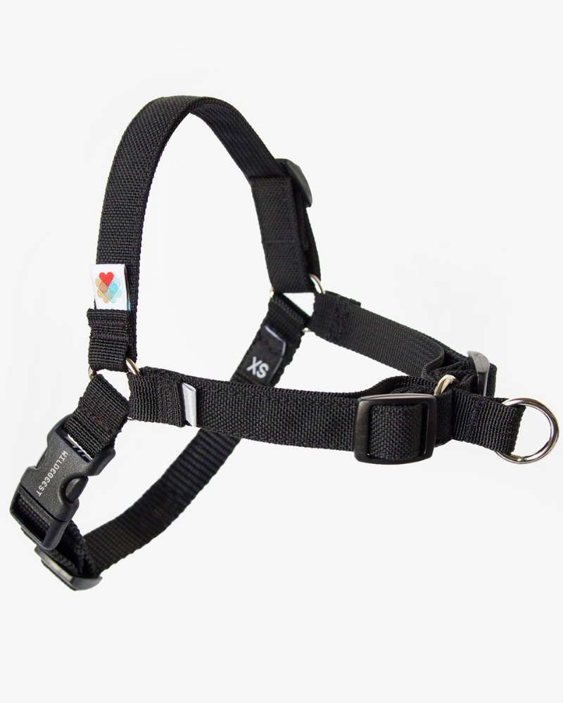 Linden No-Pull Front Clip Dog Harness in Black (Made in the USA)