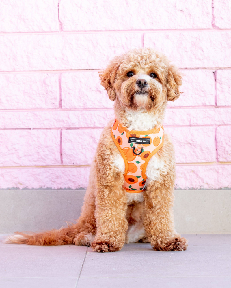 Adjustable Dog Harness in Just Peachy