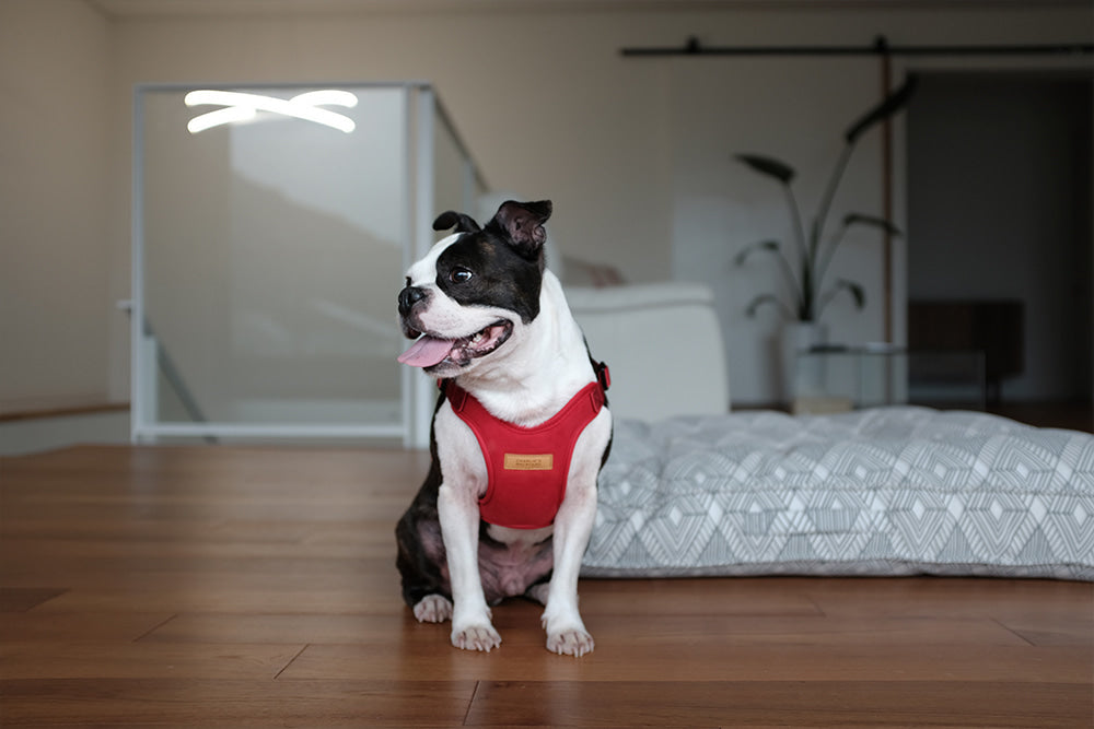 Comfort Dog Harness in Red