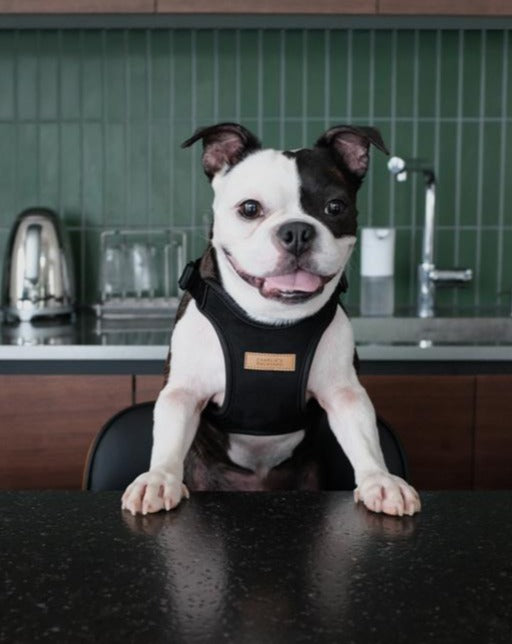 Comfort Dog Harness in Black