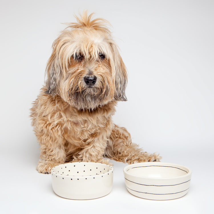 BTW CERAMICS | Small Dots Dog Bowl (Dog & Co. Exclusive)