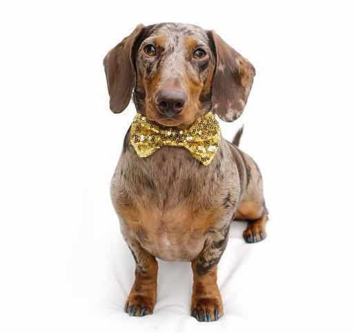 BUSTER'S PARTY SHOP | Gold Sequin Bow Tie