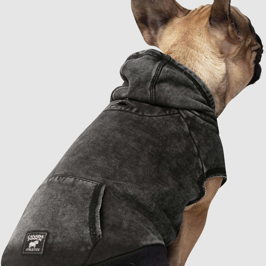 CANADA POOCH | No Authority Hoodie