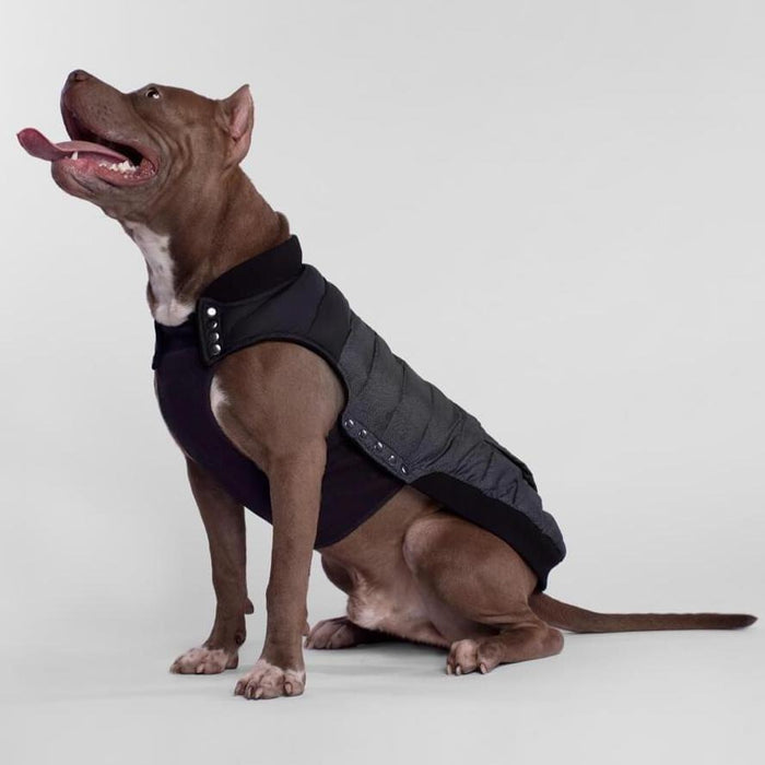 CANADA POOCH | Summit Stretch Vest in Black Pepper (BIG DOG SALE)