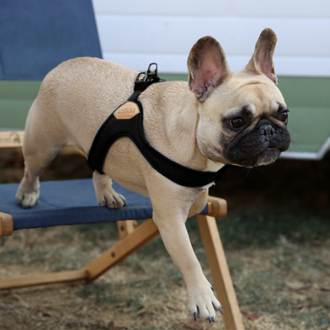 Buckle Up Easy Dog Harness in Black