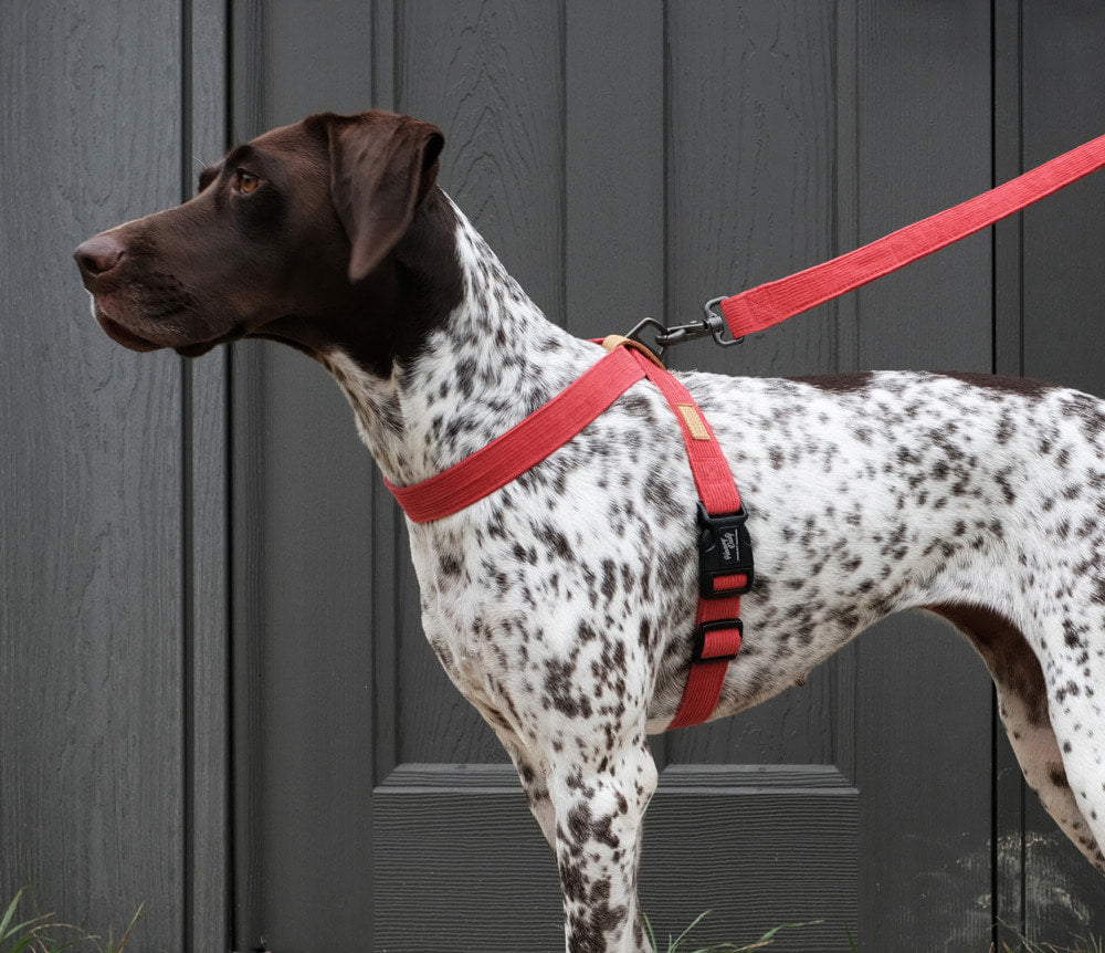 CHARLIE'S BACKYARD | Field Leash in Red