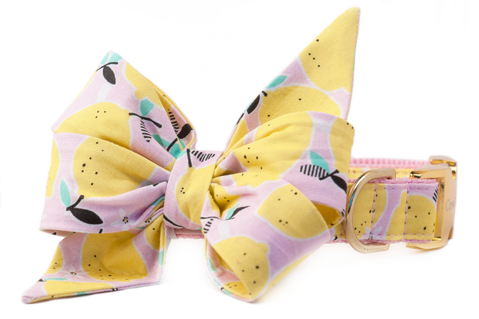 CREW LA LA | Belle Bow in Fresh Squeezed