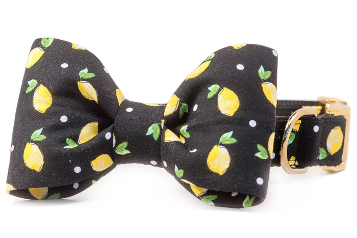 CREW LA LA | Tom Collins Bow Tie