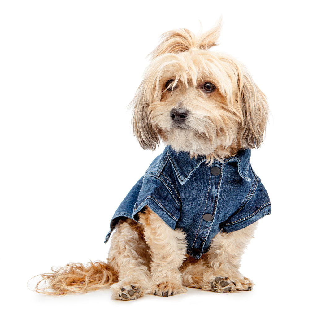 DL1961 | Denim Jacket in Puppy Breath