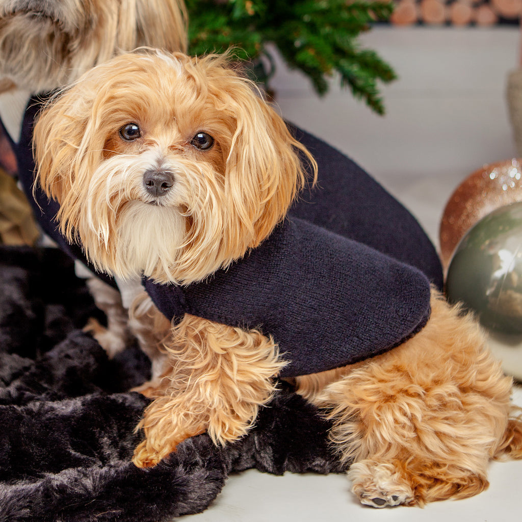 The Marmalady Cashmere Dog Hoodie in Midnight