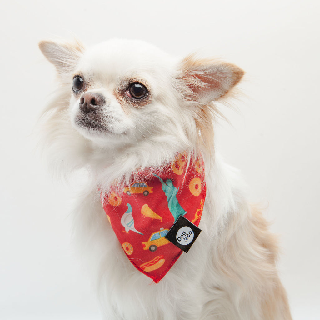 Nutty for New York Dog Bandana