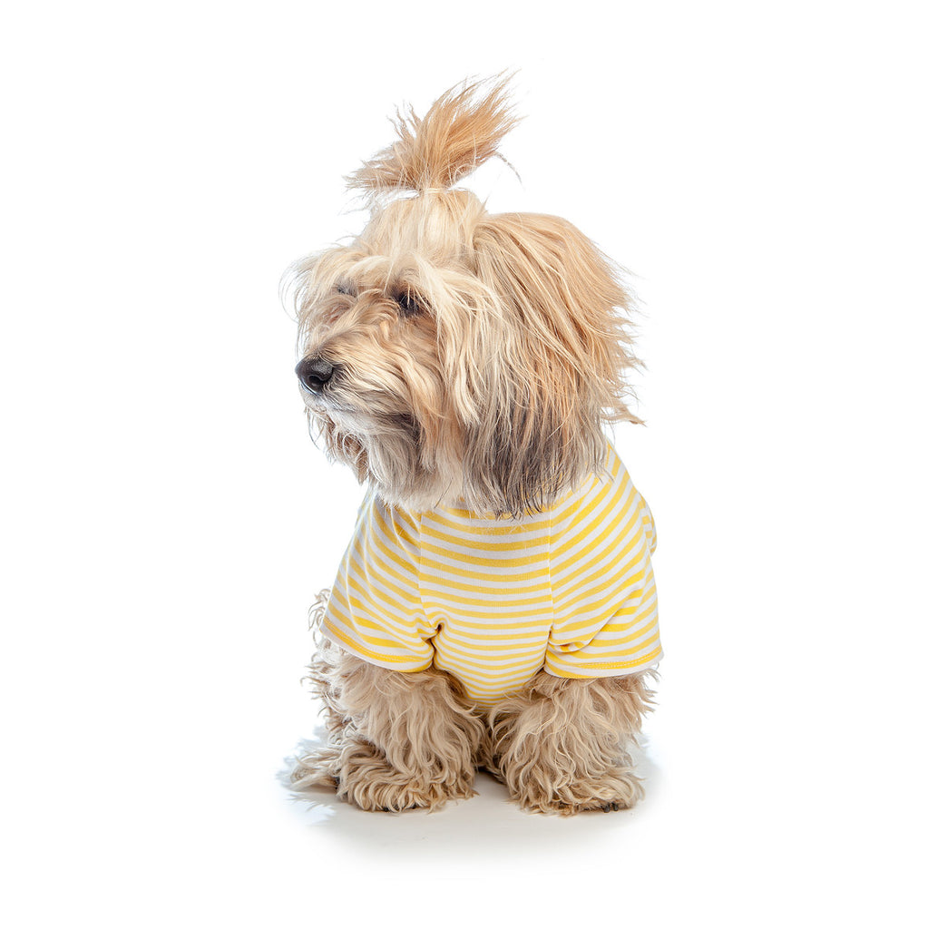 DOG & CO. | Perfect T in Sunshine Yellow & White Stripe
