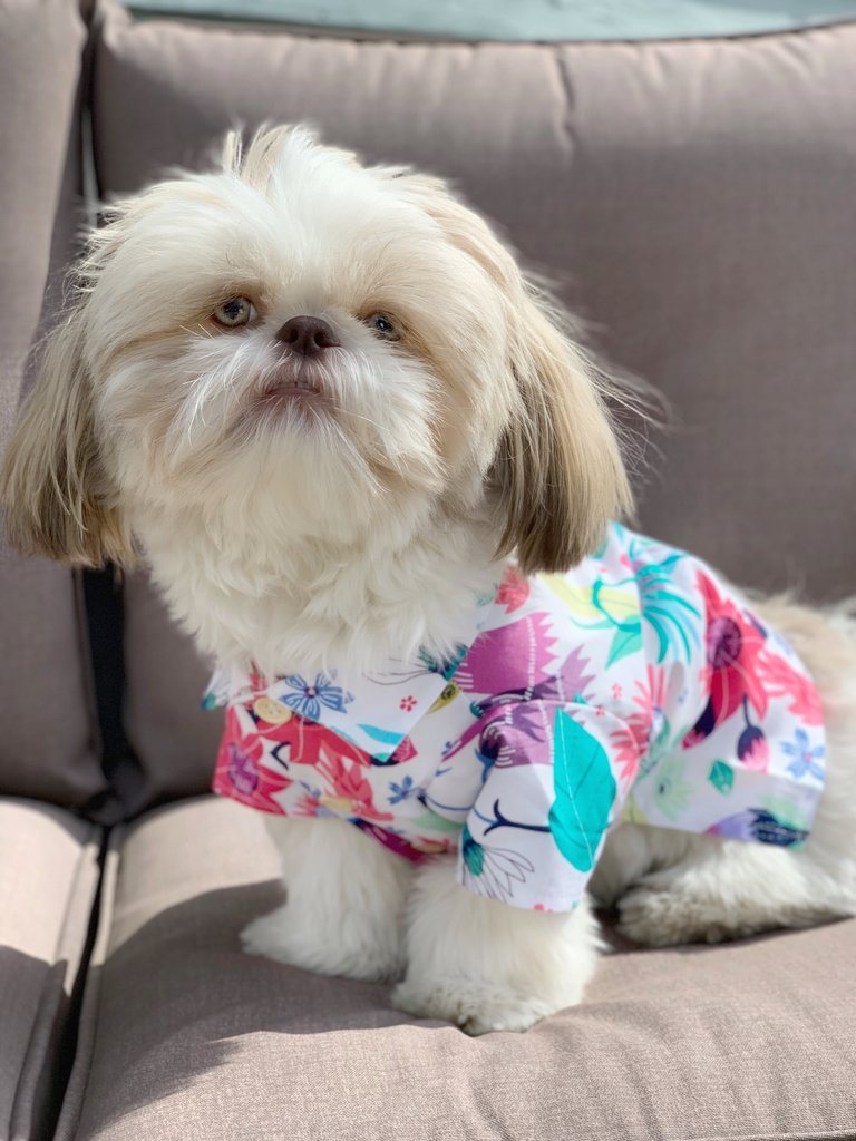 DOG THREADS | Blossom BBQ Shirt