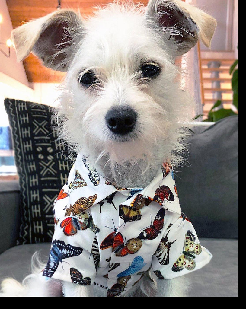 Social Butterfly Button-Down Dog Shirt