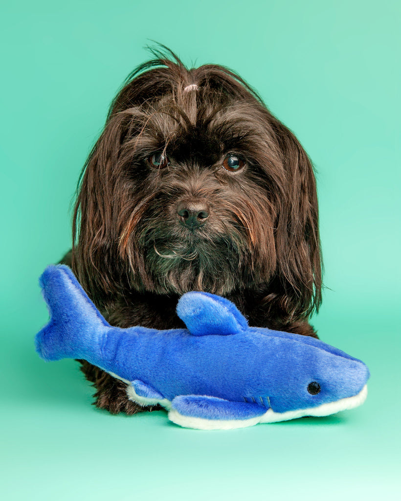 Baby Shark Plush Dog Toy