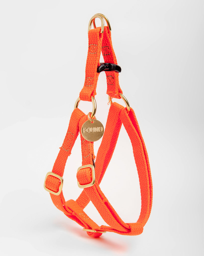 Cotton Webbing Harness in Orange