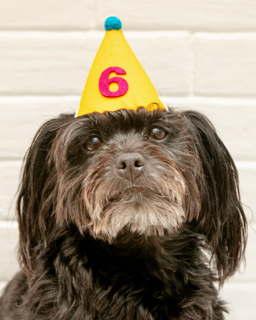 Numbered Pawty Hat (Made in the USA)