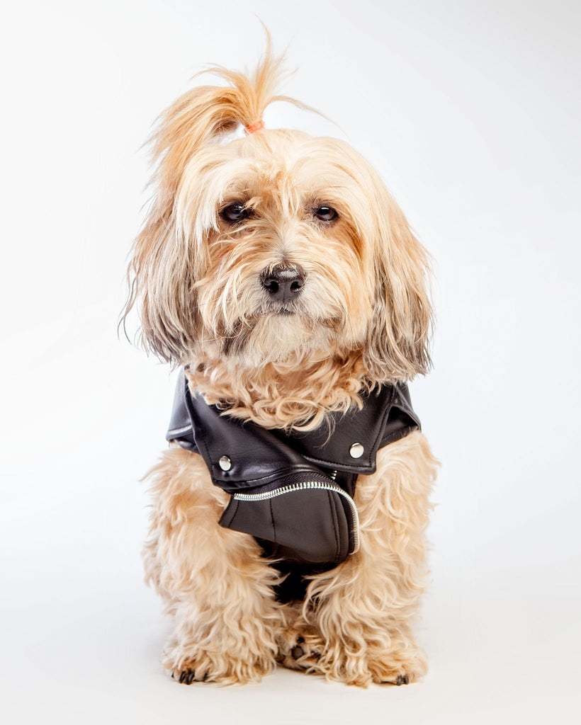 Vegan Leather Moto Vest for Dogs