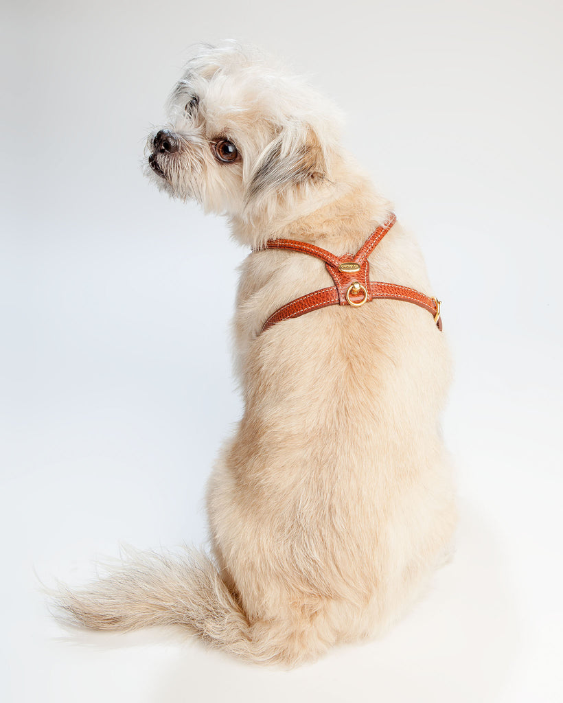 Italian Leather Harness in Brown